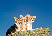 PUP 30 DC0012 03