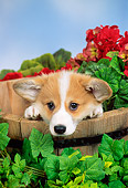 PUP 30 FA0002 01