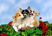 PUP 30 FA0004 01