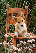 PUP 30 RC0003 01