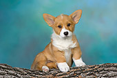 PUP 30 RK0056 01