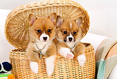 PUP 30 YT0001 01