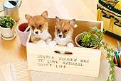 PUP 30 YT0002 01