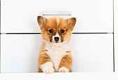 PUP 30 YT0005 01