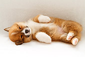 PUP 30 YT0006 01