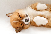 PUP 30 YT0007 01
