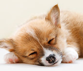 PUP 30 YT0008 01