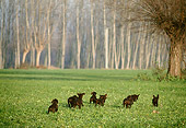 PUP 31 AB0001 01