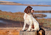 PUP 31 RK0010 04
