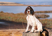 PUP 31 RK0010 07