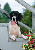 PUP 31 CE0004 01