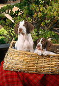 PUP 31 RC0001 01