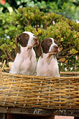 PUP 31 RC0002 01