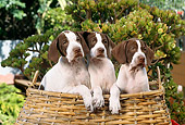 PUP 31 RC0003 01