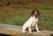 PUP 31 RK0001 04