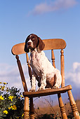 PUP 31 RK0009 01