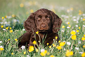 PUP 31 SS0001 01