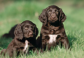 PUP 31 SS0002 01