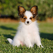 PUP 32 CB0002 01