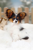PUP 32 PE0001 01