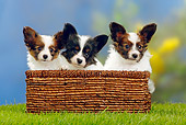 PUP 32 PE0002 01