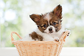 PUP 32 YT0009 01