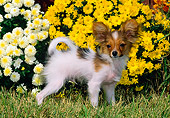 PUP 32 CE0001 01