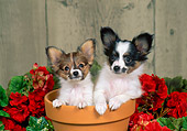 PUP 32 FA0003 01