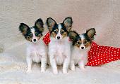 PUP 32 FA0005 01