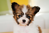 PUP 32 YT0001 01
