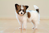 PUP 32 YT0002 01