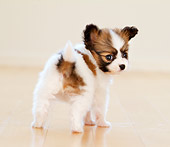 PUP 32 YT0003 01