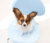 PUP 32 YT0005 01