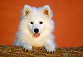 PUP 33 GR0013 01