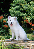 PUP 33 CE0001 01