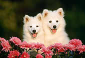 PUP 33 GR0009 02