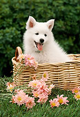 PUP 33 RC0003 01