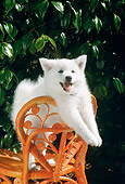 PUP 33 RC0004 01