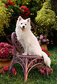 PUP 33 RC0005 01