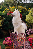 PUP 33 RC0006 01
