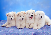 PUP 33 RC0008 01