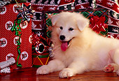 PUP 33 RK0001 05