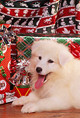 PUP 33 RK0001 07