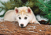 PUP 34 FA0001 01