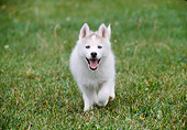 PUP 34 GR0014 01