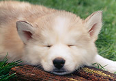 PUP 34 GR0015 01