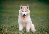 PUP 34 GR0017 01
