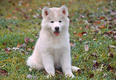 PUP 34 GR0018 01