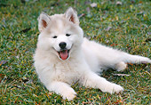 PUP 34 GR0019 01