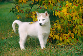 PUP 34 GR0020 01
